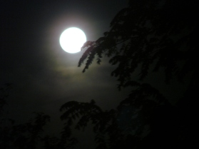 Image result for The moon in the distance